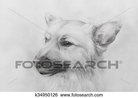 hond, potlood tekenen, op, oud, papier, ouderwetse, paper., hond
