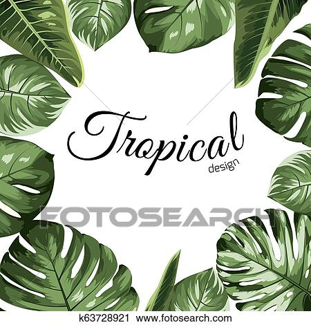 Tropical Vector Design Border Frame Element Green Monstera Philodendron Jungle Palm Tree Leaves Assortment Clipart K63728921 Fotosearch