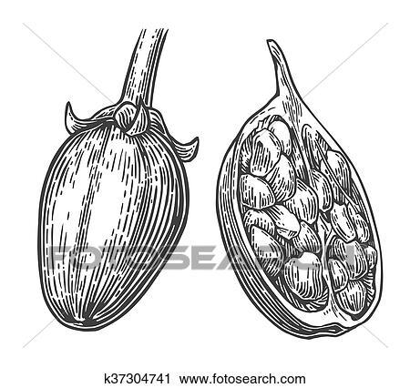 Clipart Baobab Frucht Und Samen K37304741 Suche Clip Art