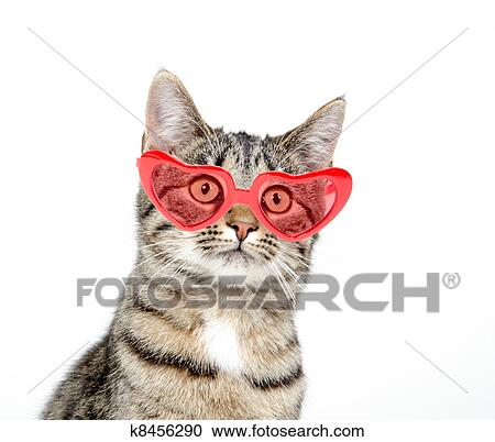 Cute Cat With Heart Sunglasseson White Background Stock Image