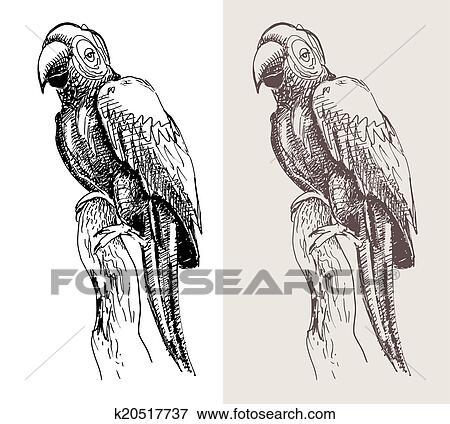 Original Typon Perroquet Noir Croquis Dessin Oiseau Clipart