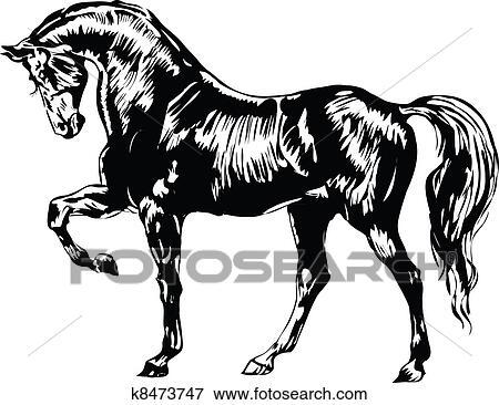 黒いそして白い 馬 イラスト K8473747 Fotosearch