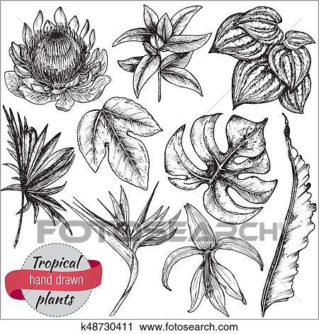 Vecteur Collection De Main Dessiné Fleurs Tropicales Et Feuilles Clipart