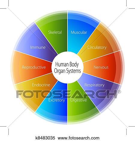 Clipart - cuerpo humano, órgano, sistemas, gráfico k8483035 - Buscar ...