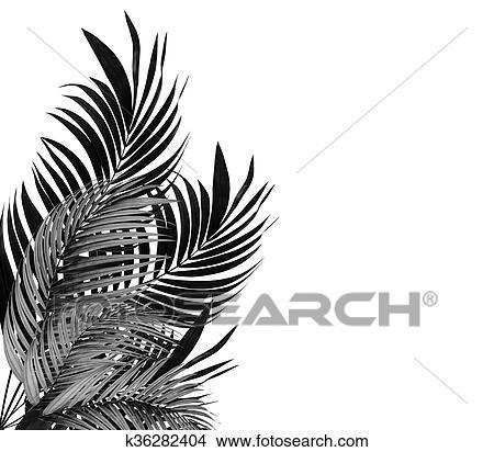 Dessins feuilles de palmier blanc fond tonalit - Dessin fond noir ...