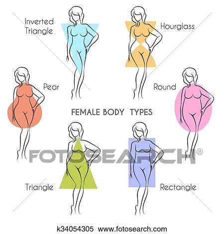 387c8d01e Female body types anatomy. Main woman figure shape