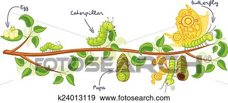 The Metamorphosis Of The Butterfly Clip Art K24013119 Fotosearch