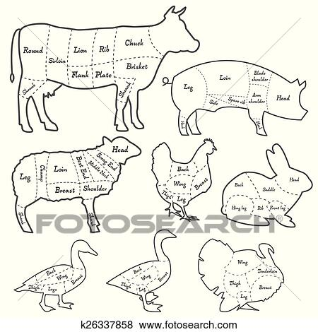Vintage Outline Diagram Meal Cutting Of Domestic Animals Clip Art K26337858 Fotosearch