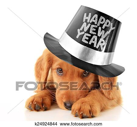 shy puppy wearing a happy new year top hat