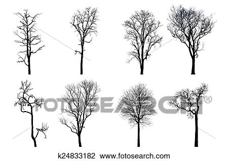 Dead Tree Silhouette Dry Oak Crown Without Leafs Isolated On