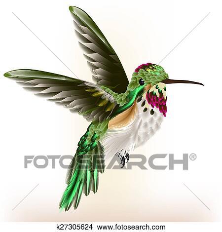 Dessins beau d taill colibri dans mouche k27305624 recherche de clip arts d - Oiseau mouche dessin ...