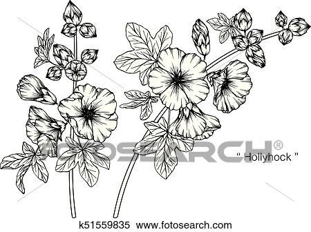 Rose Trémière Flower Dessin Et Croquis à Noir Blanc Line Art Clipart
