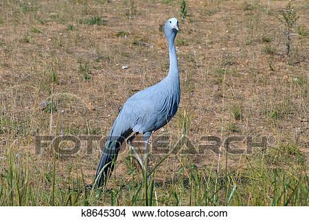 Δείτε το μεγάλο πουλί μου