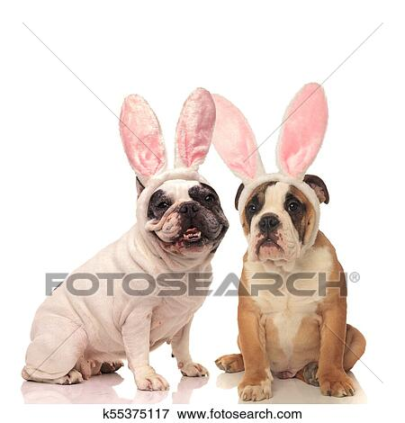 English Bulldog Dogs Wearing Bunny Ears