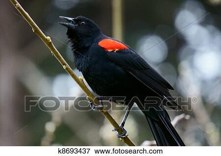 Μαύρα κορίτσια με πουλί