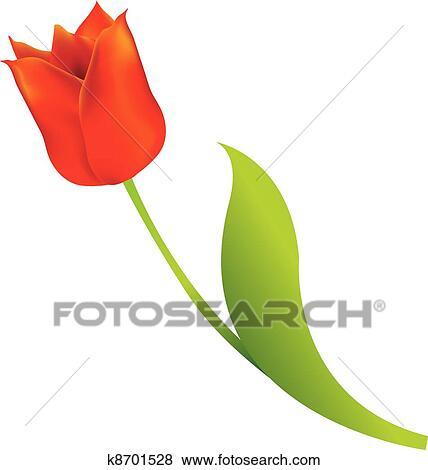 Clip Art - tulipán rojo, blanco, plano de fondo k8701528 - Buscar ...