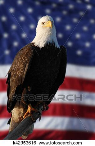 Stock Images Of American Flag Eagle Perched Blur Flag K42953616