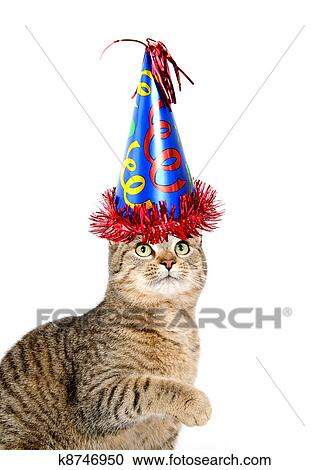 Cute Cat With Party Hat On White Background Stock Image