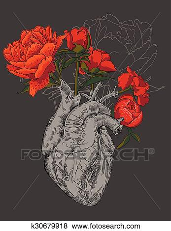 Clip Art Dibujo Corazón Humano Con Flores K30679918 Buscar
