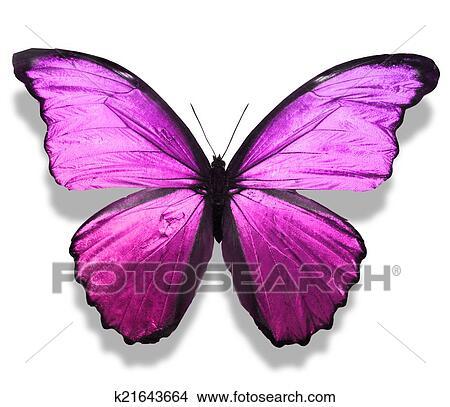 Dessins couleur papillon k21643664 recherche de clip - Papillon dessin couleur ...