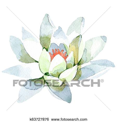 Stock Illustration Of White Lotus Floral Botanical Flower