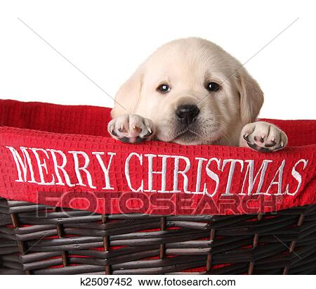 Merry Christmas Puppies.Merry Christmas Puppy Stock Image K25097452 Fotosearch