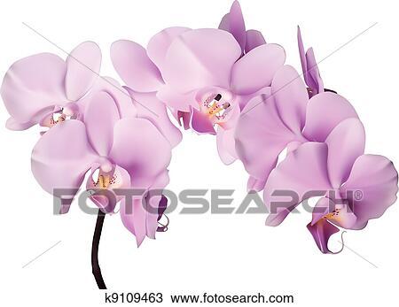 Clipart Orchidee Rose Fleurs K9109463 Recherchez Des Clip Arts