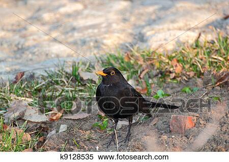 ストックフォト/写真素材 - つむじ曲がりである, 鳥. Fotosearch