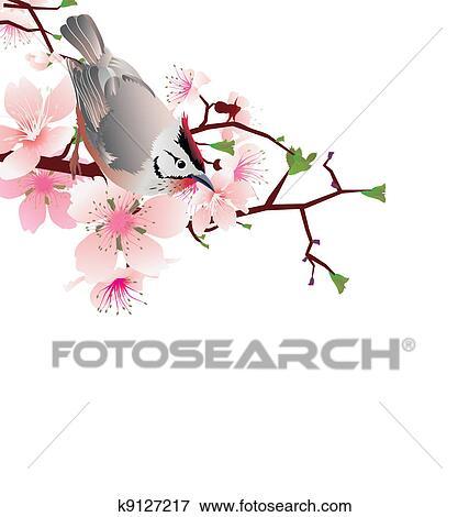 Banque D Illustrations Jailli Oiseau Sur Fleur Cerisier