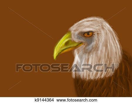 Drawings Of Amercian Bald Eagle Head Drawing K9144364