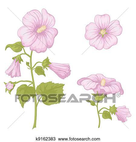 Flores Malva Aislado Dibujo K9162383