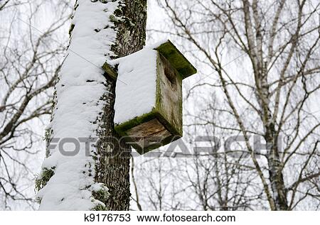 Colección de foto - pájaro, encajonar el cuadro, nevoso, unido ...