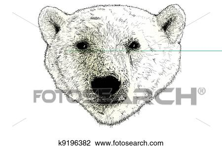 Clipart Tete A Ours Blanc Illustration Blanc K9196382