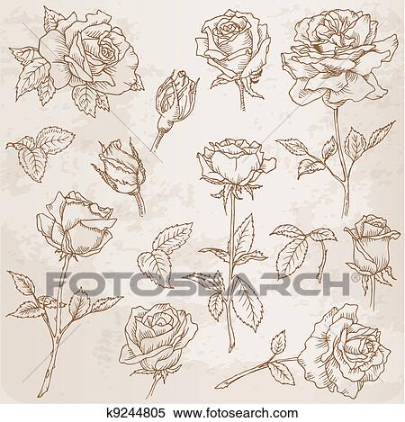 Clipart Of Flower Set Detailed Hand Drawn Roses In Vector K9244805