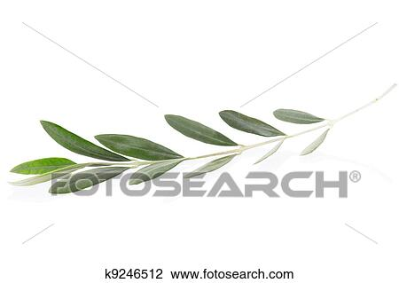 Stock Photo Of Olive Branch Peace Symbol K9246512 Search Stock