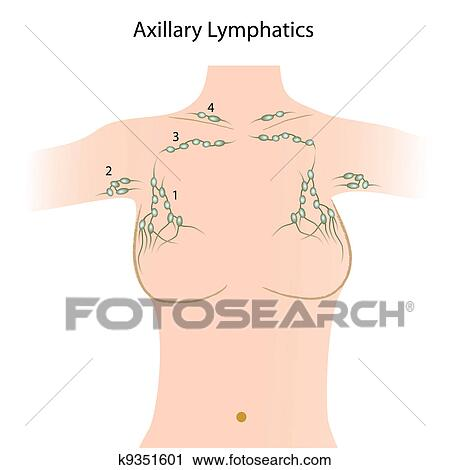 Clipart of Axillary lymph nodes, esp8 k9351601 - Search Clip Art ...