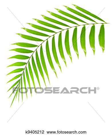 Stock Foto - frisch, palme, zweig, freigestellt k9405212 - Suche ...