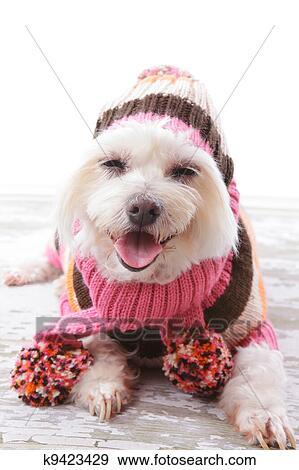 Roze Wollen Trui.Vrolijke Hond In Dikke Wollen Trui En Sjaal Stock Foto