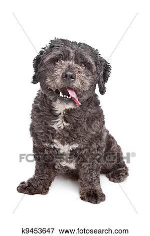 boomer, hond stock foto | k9453647 | fotosearch