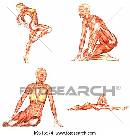 Femme Dessin Corps dessins - femme, corps humain, anatomie, pack-3of5 k9515574