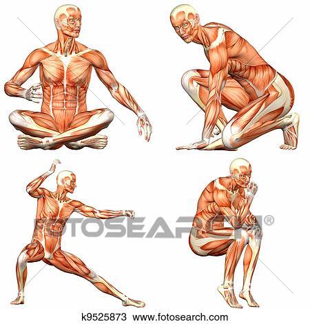 Dibujo - macho, cuerpo humano, anatomía, paquete, -, 3of3 k9525873 ...