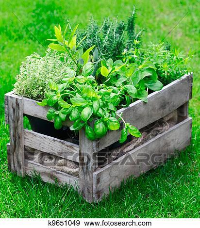 Rustique Caisse A Herbes Fraiches Banque De Photo K9651049