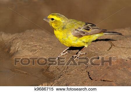 Βραζιλιάνικο πουλί φωτογραφίες καλύτερο μεγάλο καβλί βίντεο