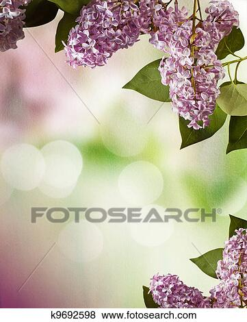 Pictures Of Lilac Spring Flowers Border Design K9692598 Search