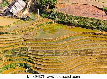 Arroz Campos Terrazas Banco De Fotografías K11494375