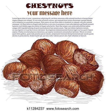 Closeup, Illustrazione, Di, Gruppo, Di, Castagne, Isolato, In, Bianco,  Fondo.