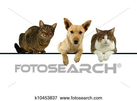 Dog And Cats Over A Blank Banner Stock Photo K10453837 Fotosearch