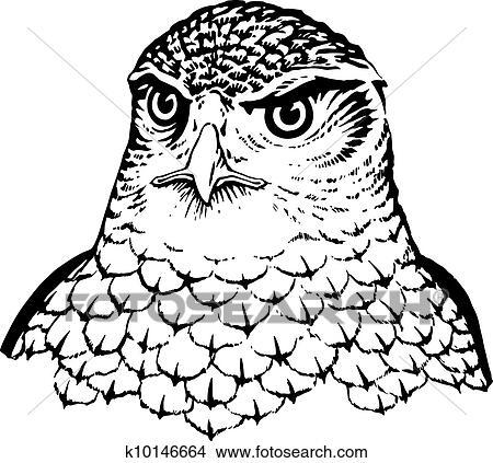 Falcon Clipart K10146664