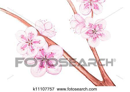 Banque D Illustrations Fleur Sakura Dessin De Les Peinture