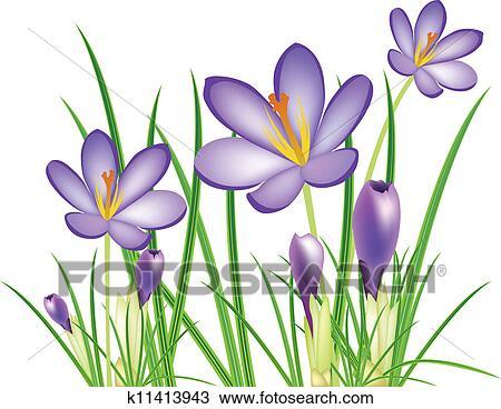 Clipart Frühling Krokus Blumen Vektor Illus K11413943 Suche